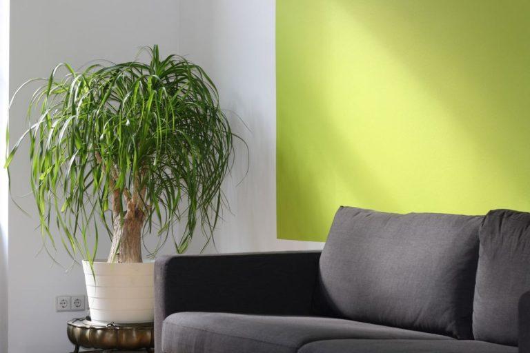 salon canapé et plante verte