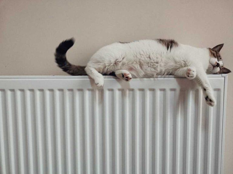 radiateur-electrique-chat